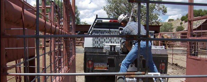 Livestock Inspection