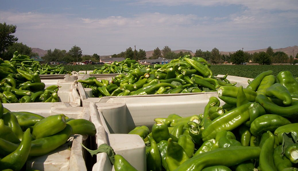 New Mexico Green Chile is a significant part of the state's agriculture