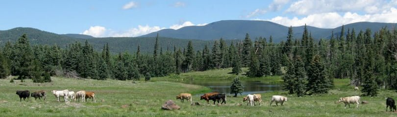 Cows are shown grazing in grassy clearing. Trees, mountains, and clouds are in the background.