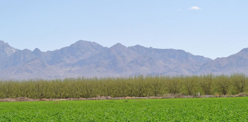 Crops growing in late summer overlooked by the organ mountains