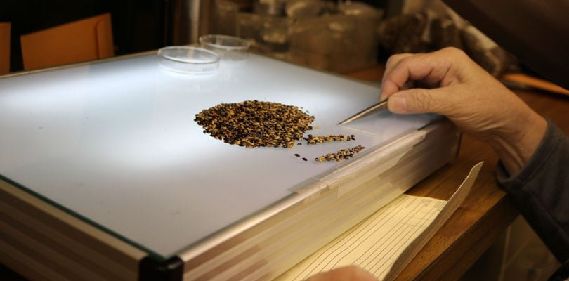 Seeds are shown on a lighted table. A person is moving the seeds into a sealed envelope. NMDA's seed lab is one of many labs