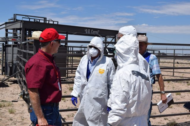 Dr. Tim Hanosh (left), director of the New Mexico Department of Agriculture Veterinary Diagnostic Services Division, participated in a New Mexico Agriculture Livestock Incident Response Team training exercise in 2018. Federal, state and local agencies came together to host an animal husbandry and biosecurity exercise to prepare responders for a potential emergency incident involving livestock in New Mexico. The New Mexico Veterinary Medical Association named Hanosh the state's 2019 Veterinarian of the Year by.