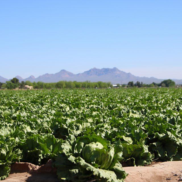 New Mexico Farmers