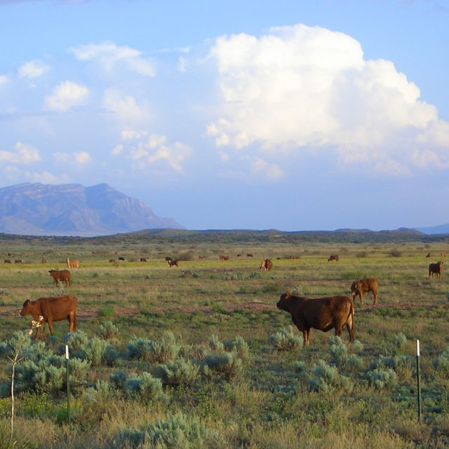 New Mexico Ranchers