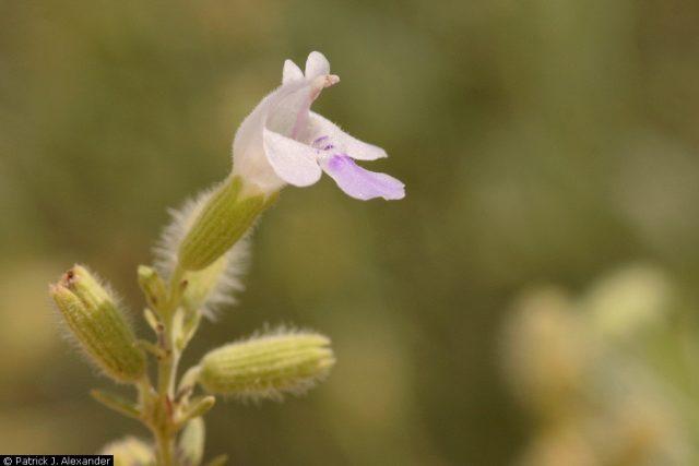 Close-up of a light purple flower