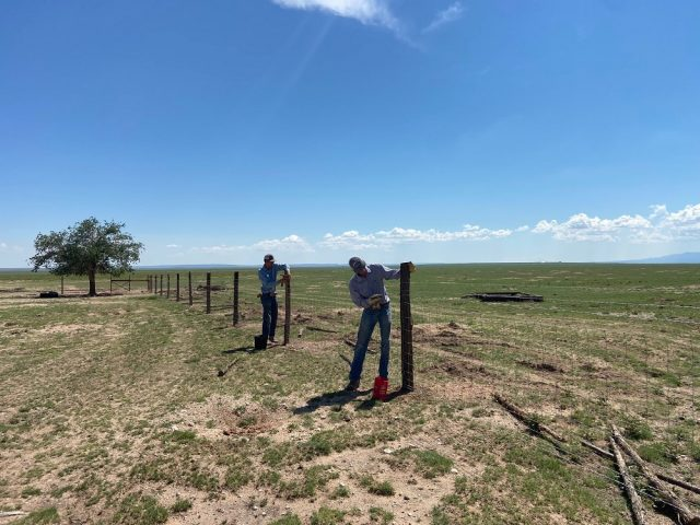 Two young men repairing a fence on ranch land